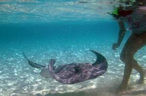 Rochen mit Annika von Grand Cayman