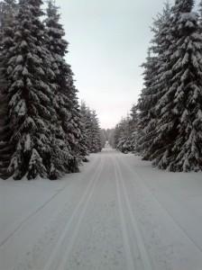 wieder zu Hause im Schnee